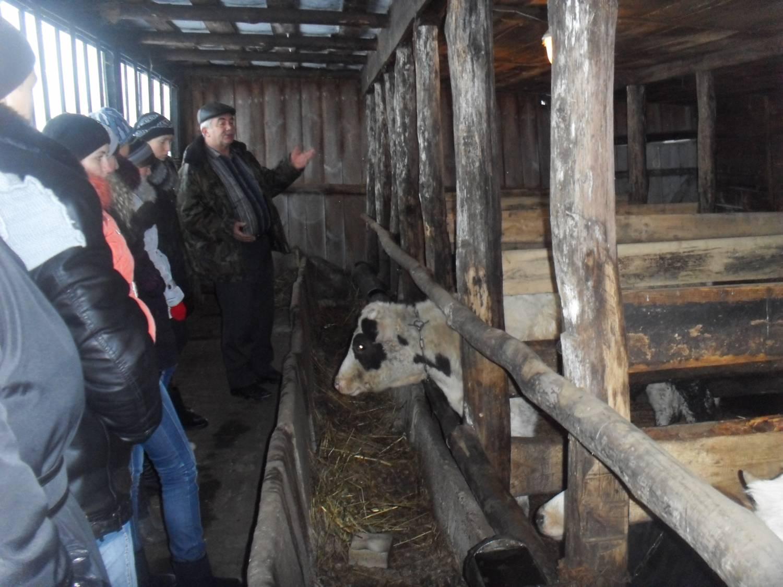 Сарай для бычков фото